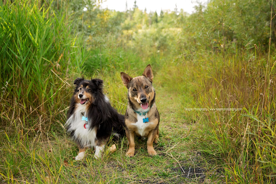 Two small furry dogs pose for photos in long grass at Larch Sanctuary