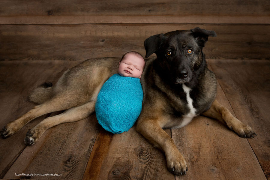 A baby boy sleeps wrapped in a turquoise blanket  laying next to his german shepard dog