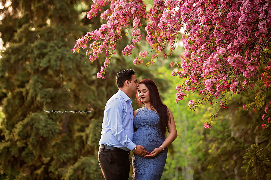 A husband kisses his Hindu wife during a matenrity photo session with the cherry blossoms in Edmonton
