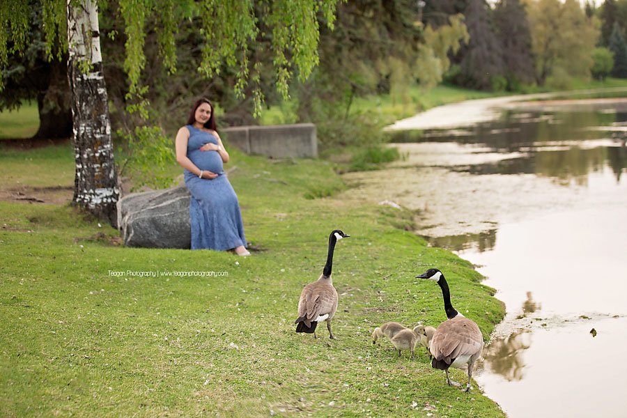 A family of Canadian geese walk on the grass at Hawrelak Park while a woman poses for maternity photos in the background
